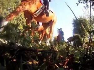 chevaux-republicaine