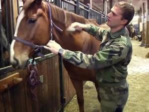 chevaux-marechal